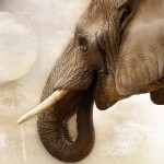 elephant-1034382_1920