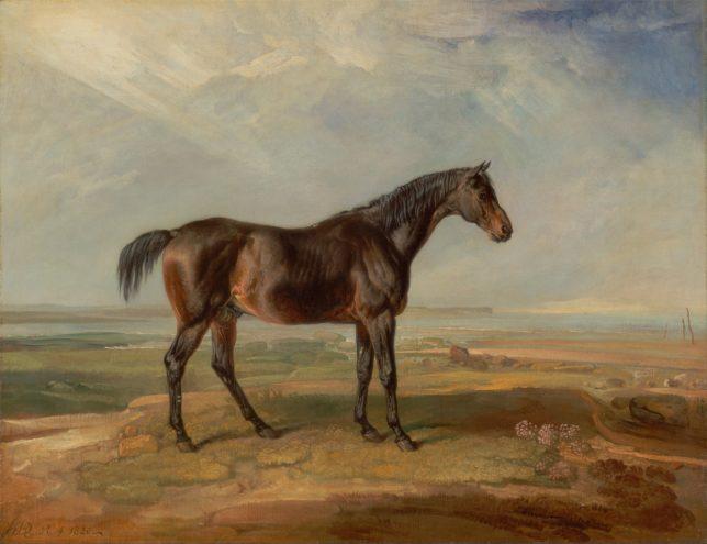 De vrouw en het paard